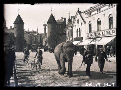 """26.11. avatakse Kiek in de Köki kindlustustemuuseumis näitus <b>""""Linnaloom. Lehm, lutikas ja lohe Tallinna ajaloos""""</b>"""